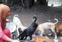hukum memelihara anjing, hukum pelihara anjing, hukum menyentuh anjing, hukum menjadikan anjing untuk hewan berburu, hukum memelihara anjing dalam islam, pelihara anjing di rumah