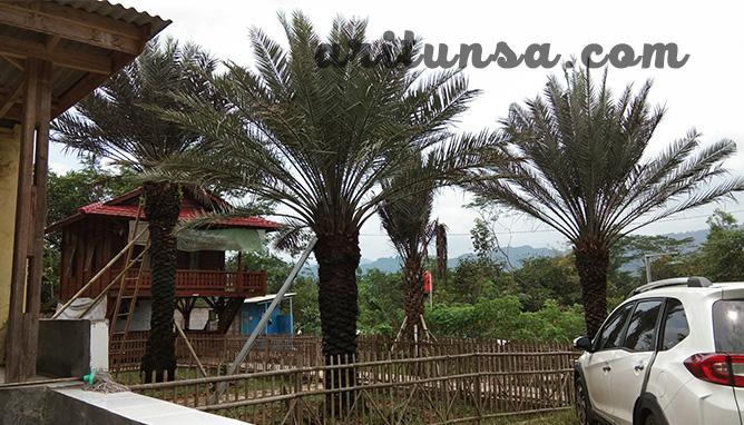kampung kurma, kavling kurma, kavling produktif, kampoeng kurma, kampung kurma jonggol