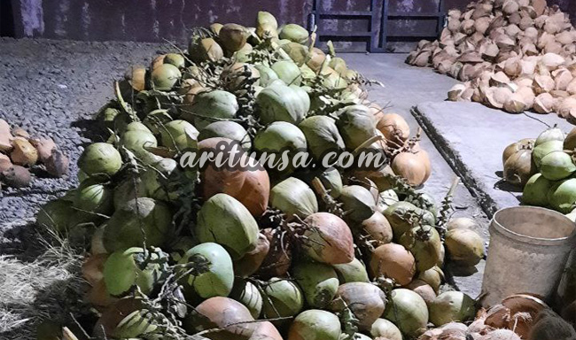 jual kelapa muda