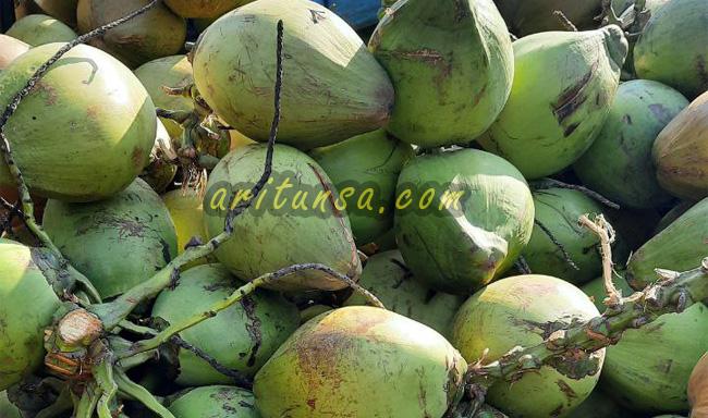 cara memilih kelapa muda